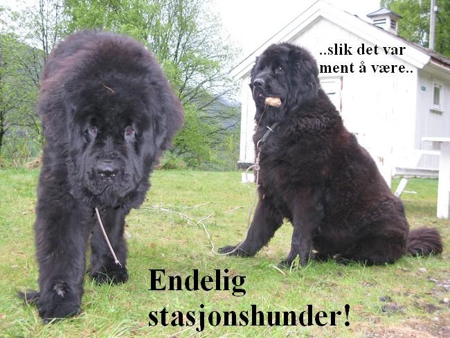 hunder-1