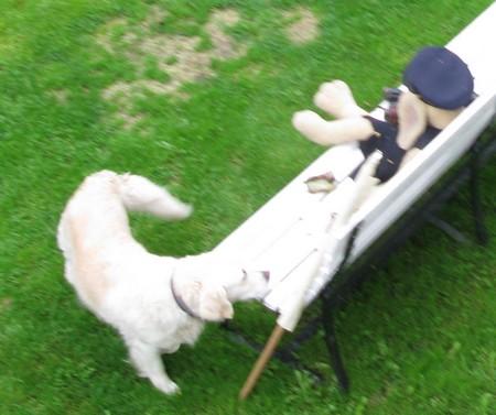 skeptiskhund