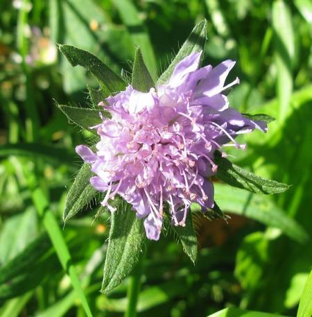 blomst4