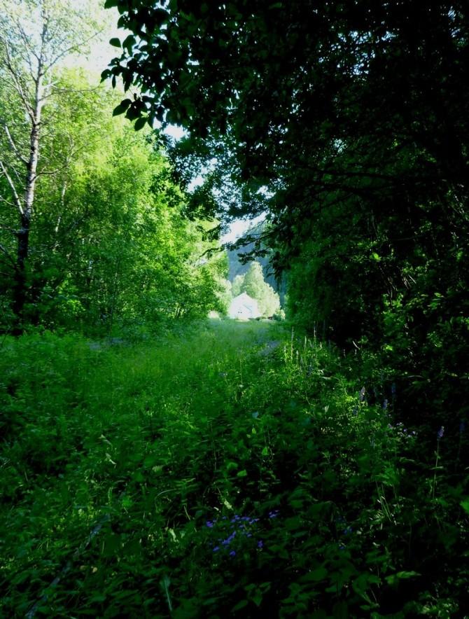myeskog1