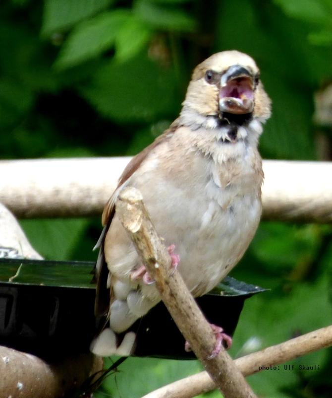 birdy-1