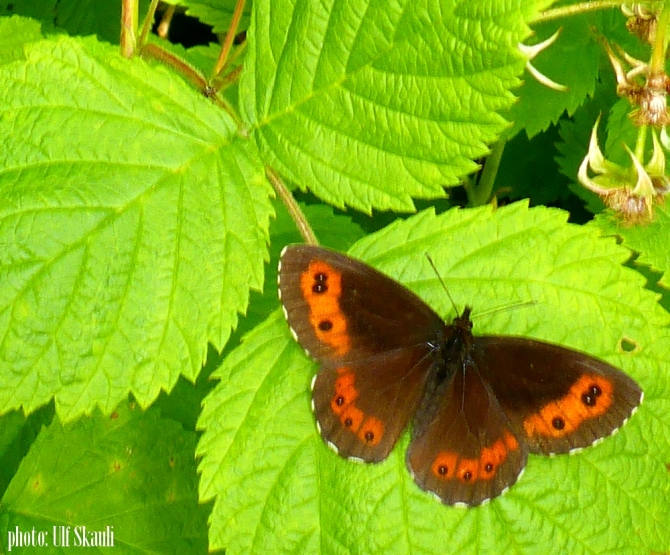 2butterfly