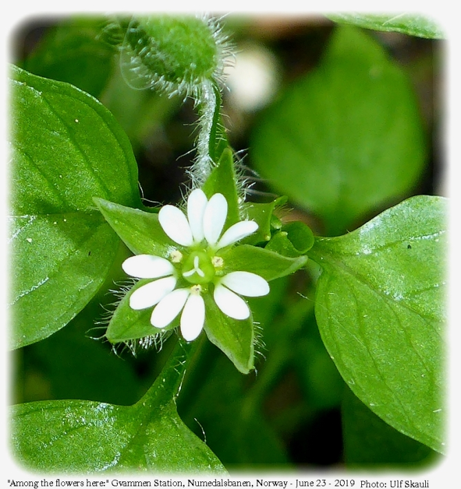 6-blom