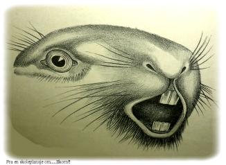 ekorntegn